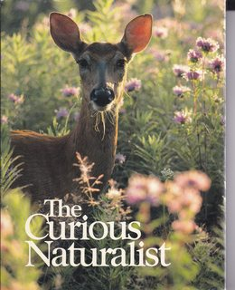 Image for The Curious Naturalist